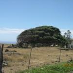 Tree near South Point