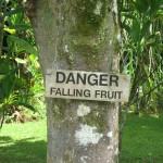 falling fruit